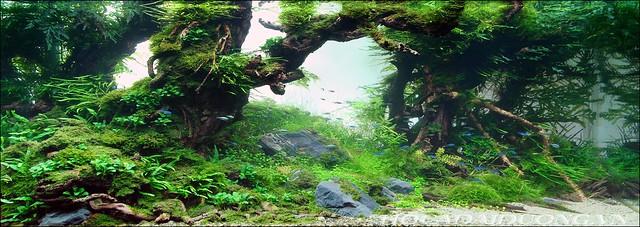 phông 3d hồ cá đại dương phong dd-06