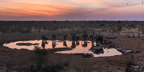 2x1 abenddämmerung africa afrika afrikanischerelefant elefanten elephantidae etoshanationalpark halali loxodontaafricana namibia panorama proboscidea rüsseltiere säugetiere vertebrata vertebrates wirbeltiere dusk mammals oshikotoregion