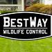 BestWay Wildlife Control.