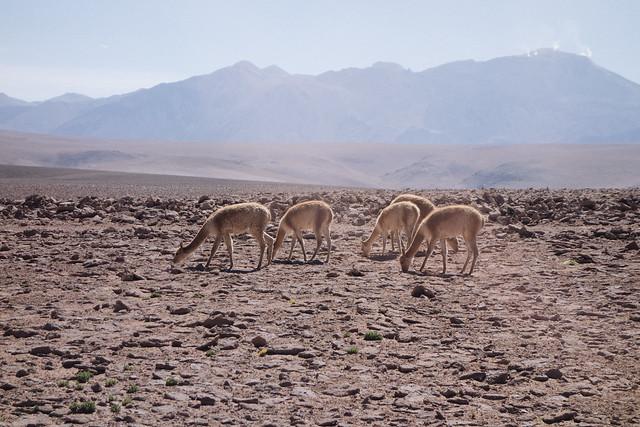 San Pedro de Atacama-2-2