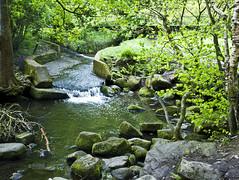 River, Woods in Bingley