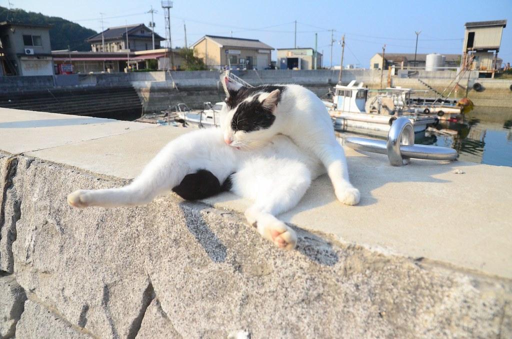 真鍋島20131030 (22)