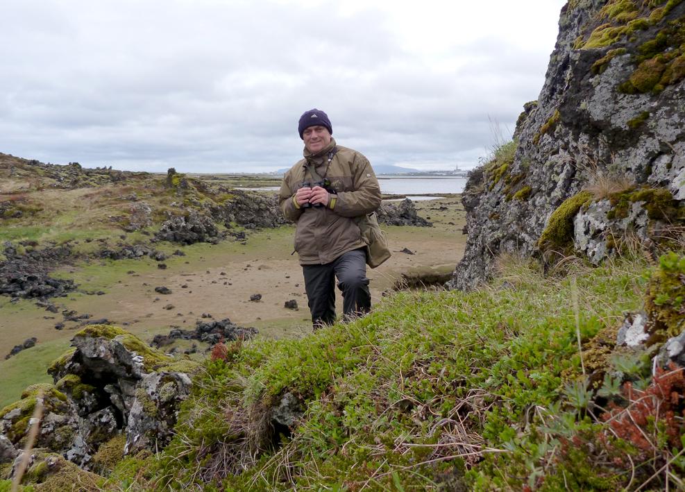 Birding at Hafnarfjordur