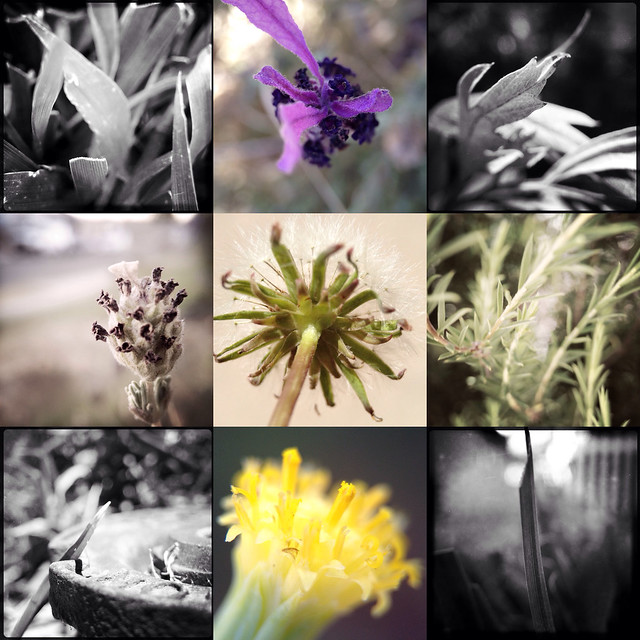 Olloclip Macro System Collage