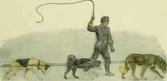 dogs being whipped, from Jack London's 'Call of the Wild'