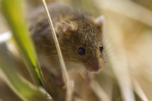 Small mouse macro