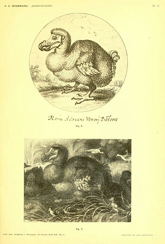 002-Dodo-studiën…1917- Anthonie C. Oudemans- Biodiversity Library
