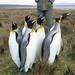 Penguins by Dunstan
