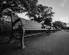 Benches, Prince Alfred Park B&W