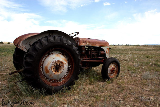 Montana Elkhorn Ranch 5_feistyharriet_July 2014