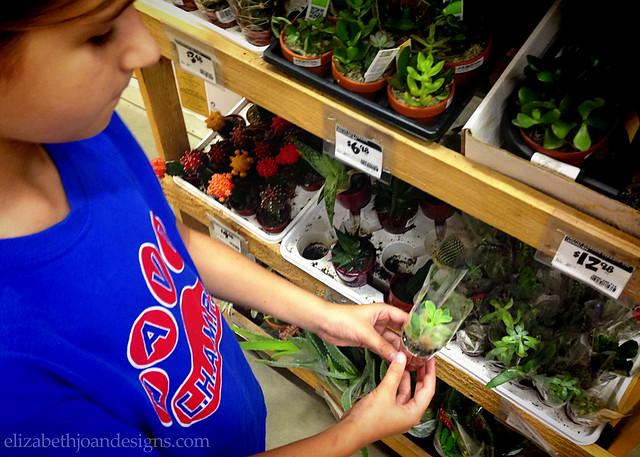 Ruler Succulent Planter 6