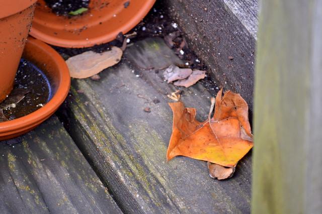 Orange leaf and terra cotta pots