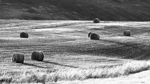 sunset sun field landscape tramonto hill bn ombre sole terra bianco nero marche paesaggio collina sera grano macerata campi d300 rotoballe cingoli serenità grottaccia