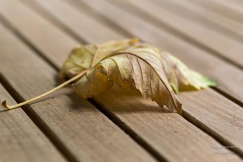 Die Blätter fallen ...