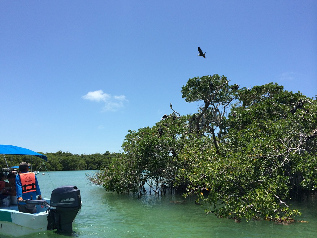 Sian Ka'an - mangrove