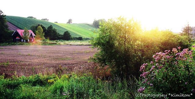 晩夏の丘2