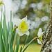 与大树对语的花