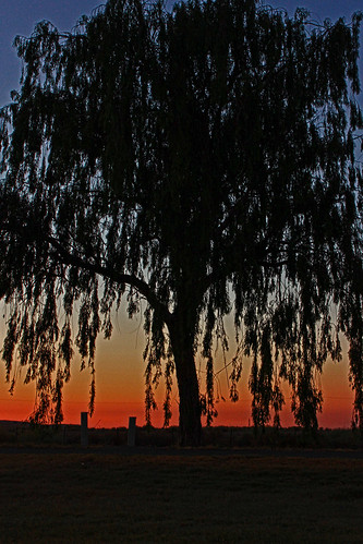 colorful sunsets bigtrees canonphotography bakersfieldcalifornia calmcolors