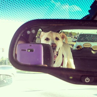 On our way for a check up at the vet... Think he's feeling better? :) (and yes, we were stopped at a red light) #dogstagram #instadog #selfie #love #megaesophagus #VestibularDisease #seniordog #ilovemyseniordog #happydog