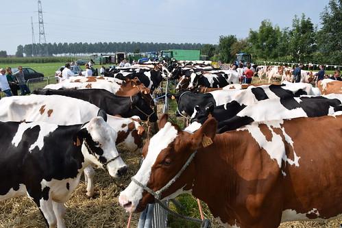 Open Landbouwdag Eeklo