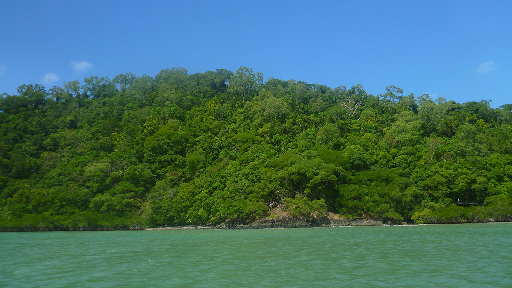 cape tribulation, cape tribulation beach, ocean safari, great barrier reef, mackay reef, snorkelling
