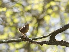 Sing for Spring