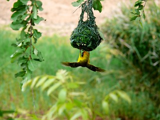 Birds in Limpopo Province