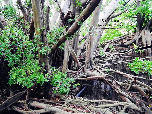 台南一日遊景點推薦安平樹屋安平老街 (29)