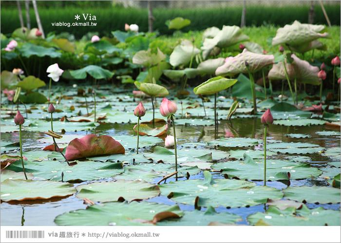 【彰化大村景點】大村雙心池塘/平和夕照平台@浪漫必遊‧約會拍照的好去處~12