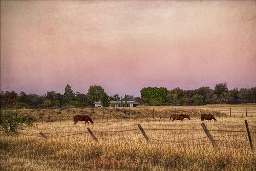 horses painting landscape dawn barcaldine
