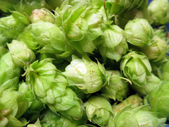 vegetable, cruciferous vegetables, produce, humulus lupulus,