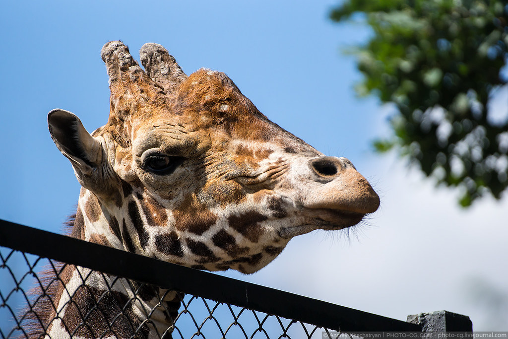zoo_2014_DSC02960_edit_resize_(c)