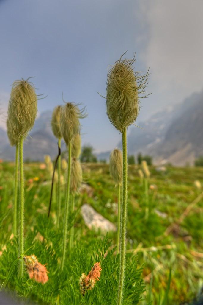 Flowers in Sunlight - Banff National Park