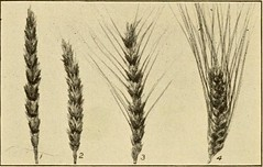 """Image from page 320 of """"The story of agriculture in the United States"""" (1916)"""