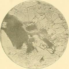 """Image from page 570 of """"Swenska wetenskaps academiens handlingar"""" (1739)"""