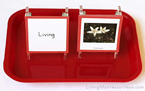 Living and Non-Living Sorting Tray