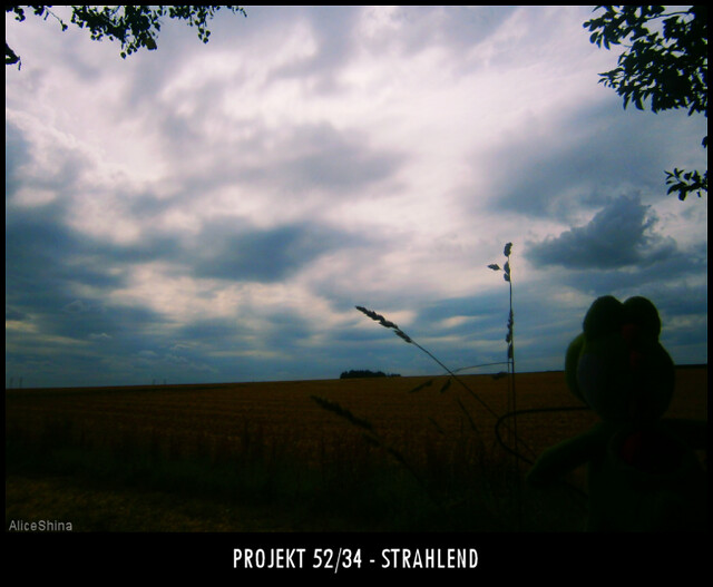 Projekt 52/34 - Strahlend