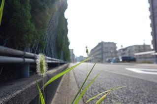 One scene of commuting 2014/07 No.15.