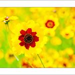 Wild-Flowers_0065