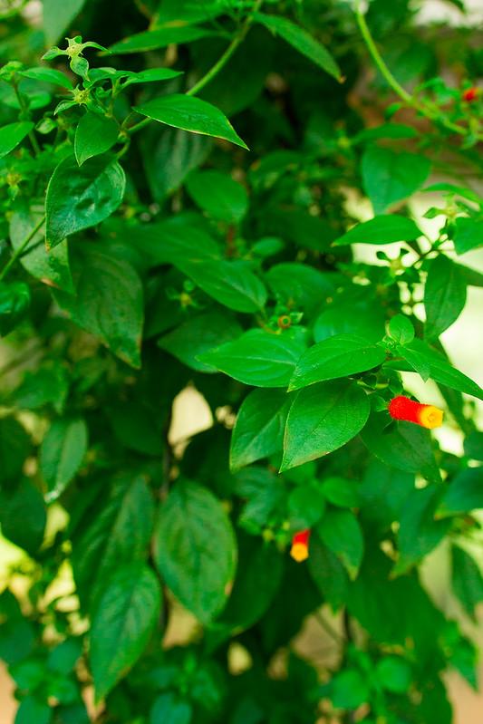 Botanical Conservatory_18