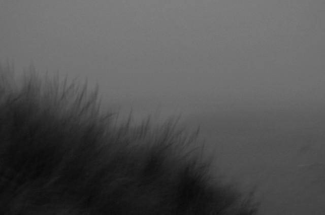 Beach Grasses in Night Fog