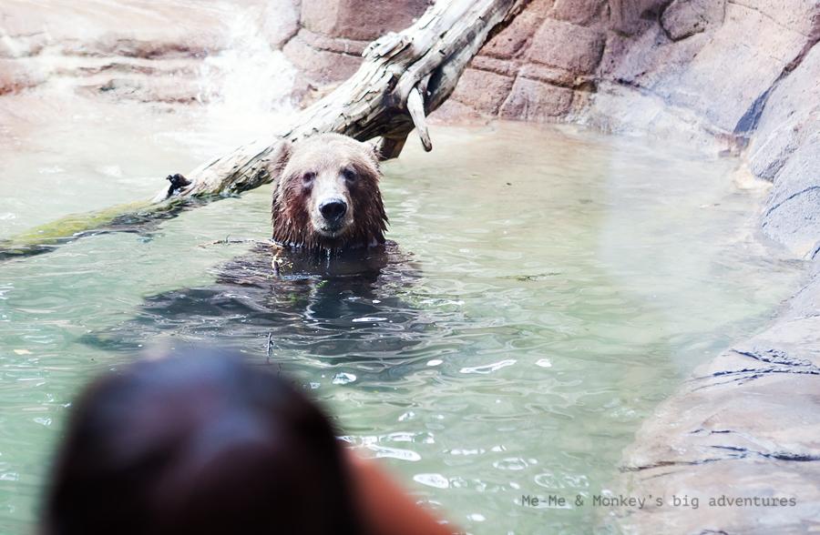 zoo 10 blog