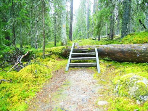 finland nationalpark pyhähäkki