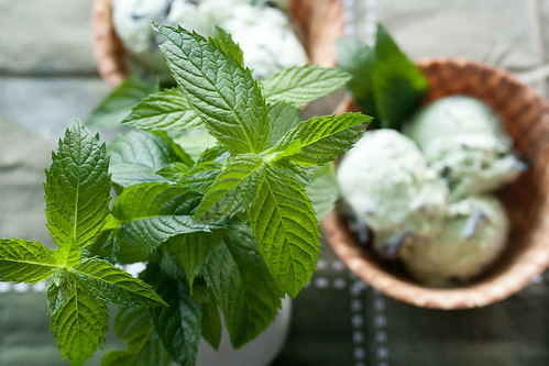 Fresh Mint Chip Ice Cream
