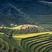 Rice Terrace by WONGWISSPHOTO