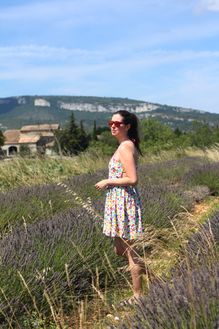 lavender fields france ardèche