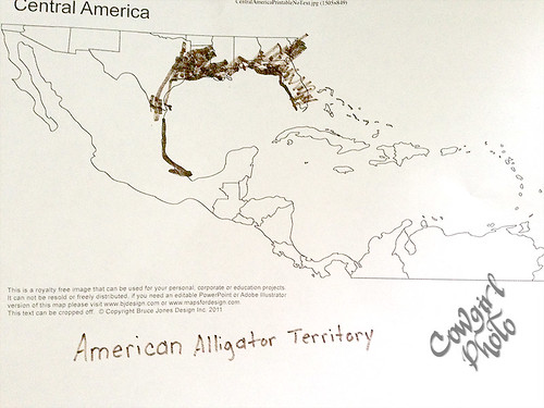 A is for Alligator Map
