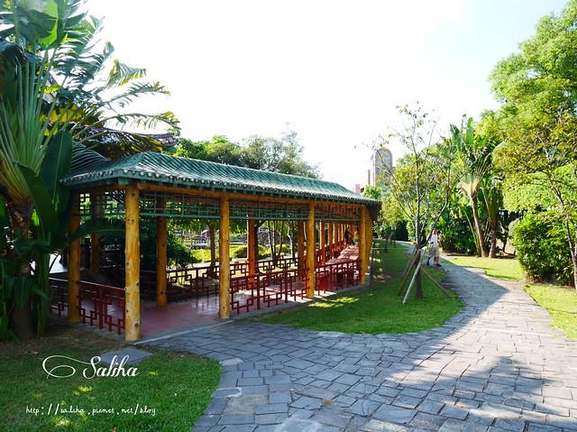 雙溪公園大王蓮 (1)