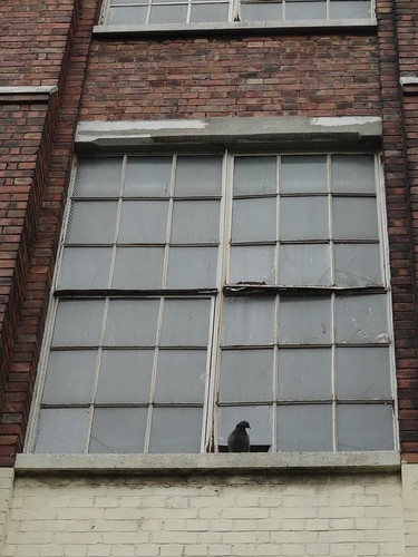 Pigeon takes ownership of factory-turned-studio
