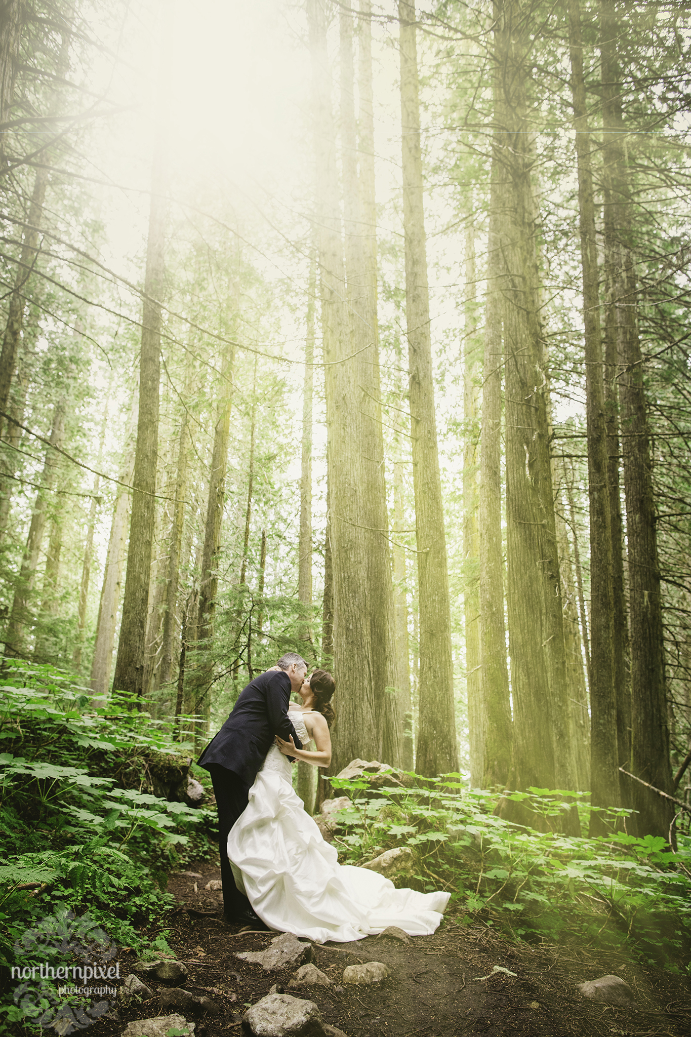 Ancient Forest After Wedding Session - British Columbia Wedding Photographer